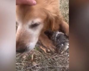 كلب يحمى الارانب