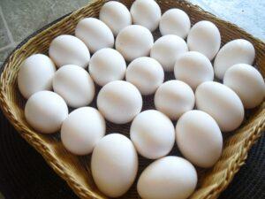 أسعار البيض اليوم السبت 19-6-2021 في مصر